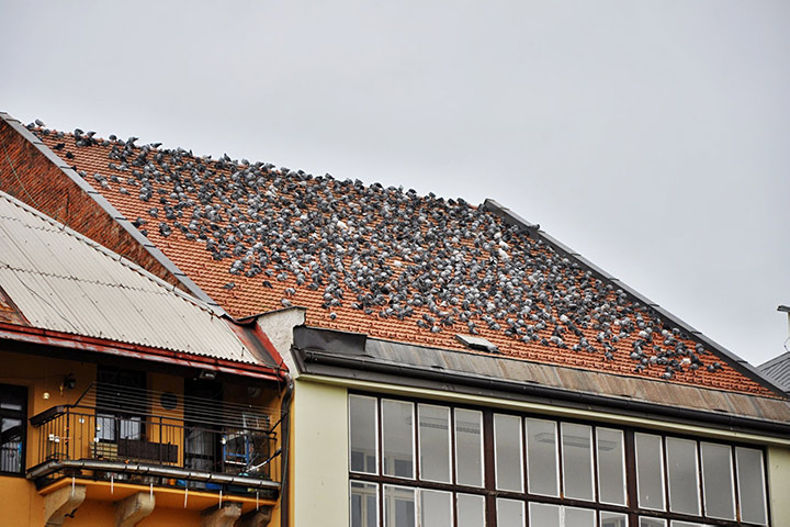 A2B Pest Control are able to install spikes to deter birds from roofs in Northolt.