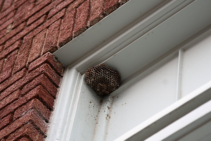 We provide a wasp nest removal service for domestic and commercial properties in Northolt.